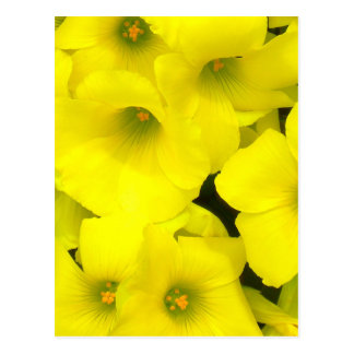 Carte Postale Fleurs jaunes de ressort dans le jardin