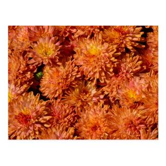 Carte Postale Fleurs oranges de chrysanthème d'automne
