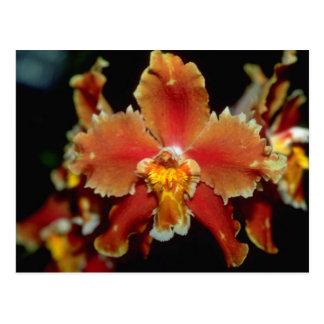 Carte Postale Fleurs oranges d'Oncidium