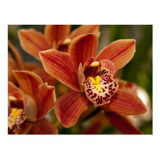 Carte Postale Fleurs oranges d'orchidée
