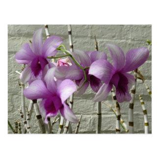 Carte Postale Fleurs pourpres d'orchidée de lavande
