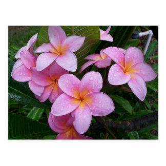 Carte Postale Fleurs roses de Plumeria d'Hawaï