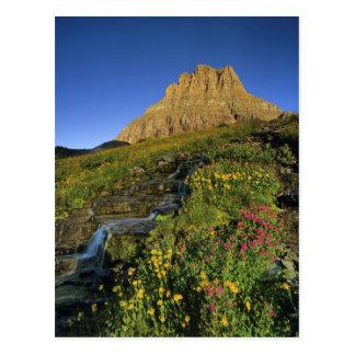 Carte Postale Fleurs sauvages alpins et Mt Clements au passage