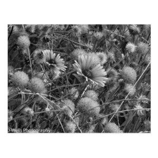 Carte Postale Fleurs sauvages dans noir et le blanc