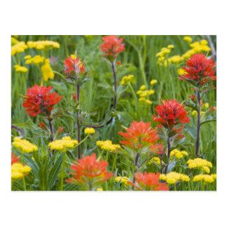 Carte Postale Fleurs sauvages de pinceau indien et de
