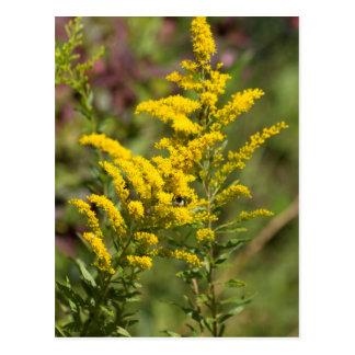 Carte Postale Fleurs sauvages dorés