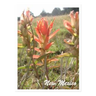 Carte Postale Fleurs sauvages du Nouveau Mexique
