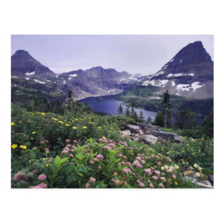 Carte Postale Fleurs sauvages et lac caché, arbustifs