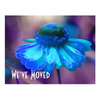 Carte postale florale adresse bleue de Zinnia de