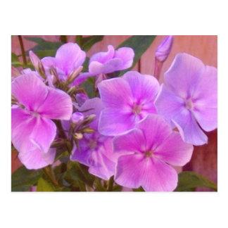Carte postale florale de Phlox