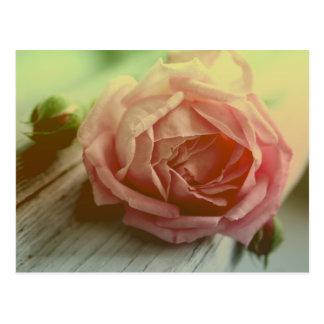Carte postale florale de rose de fleur vintage de