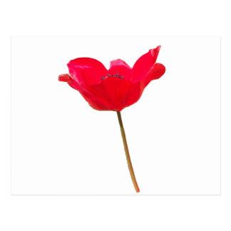 Carte Postale Flower23