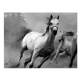 Carte Postale Fonctionnement de cheval