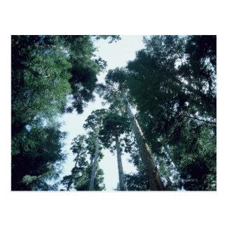 Carte Postale Forêt 25