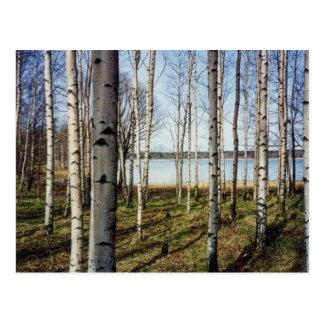 Carte Postale Forêt d'arbres de bouleau en Finlande