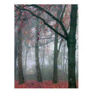 Carte Postale Forêt d'automne avec le paysage rouge de
