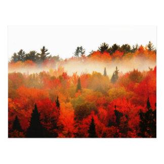 Carte Postale Forêt de montagnes d'automne d'Adirondacks de