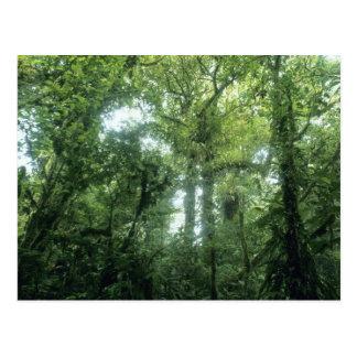 Carte Postale Forêt de nuage de Monteverde, Costa Rica.