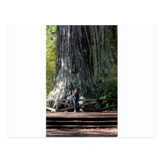 Carte Postale Forêt de séquoia