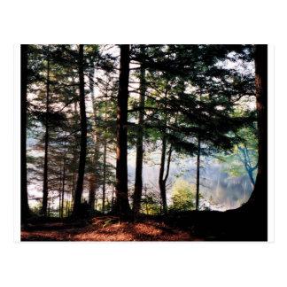 Carte Postale Forêt en verre souillé