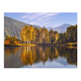 Carte Postale Forêt enchantée en automne
