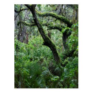 Carte Postale Forêt vert-foncé