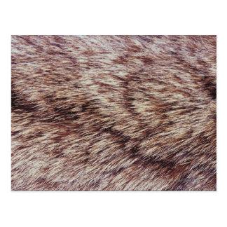 Carte Postale Fourrure de Lynx