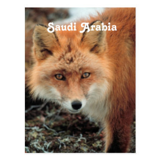 Carte Postale Fox saoudien