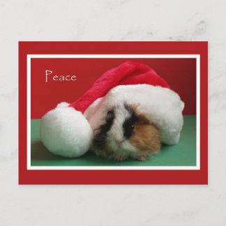 Carte postale fraîche de cobaye de Noël