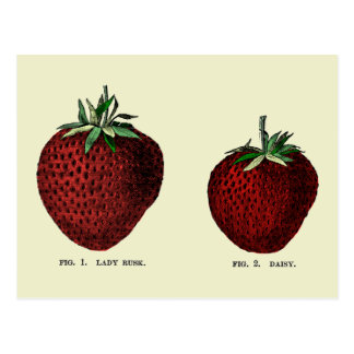 Carte Postale Fraise Botanicals