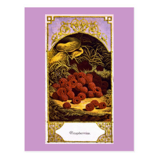 Carte Postale Framboises - annonce vintage 1874
