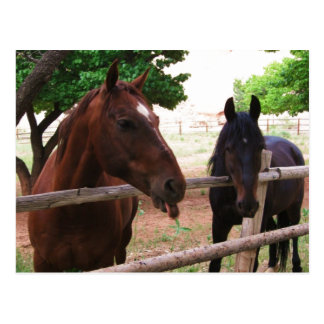 Carte Postale Framboises de cheval !