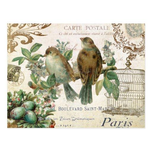 Carte postale française vintage d'oiseaux