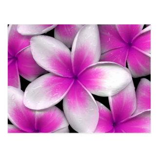 Carte Postale frangipani rose