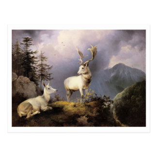 Carte Postale Friedrich Gauermann - Damwild (cerf commun