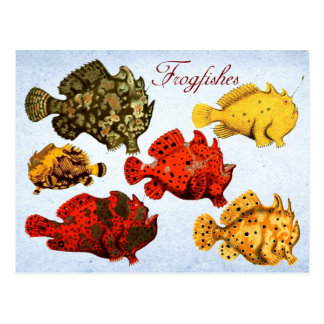 Carte Postale Frogfishes