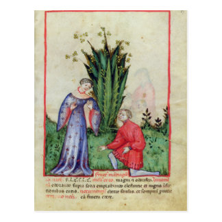 Carte Postale Fruit de mandragore, from Tacuinum Sanitatis