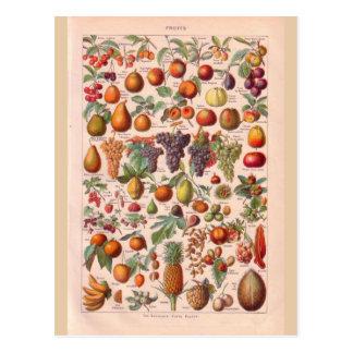 Carte Postale Fruit historique vintage