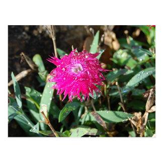Carte postale fuchsia de photo de fleur