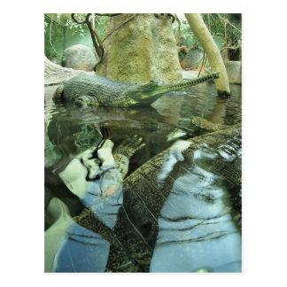 Carte Postale Gangeticus de Gavialis dans l'étang de zoo