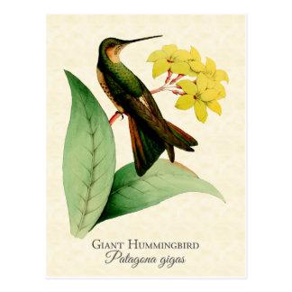 Carte postale géante de colibri