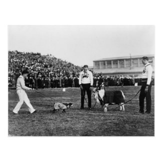 Carte Postale Georgetown--Jeu de marine, G.W. Bulldog et chèvre