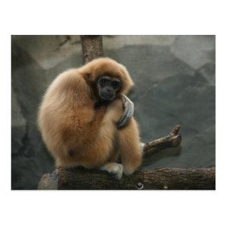 Carte Postale Gibbon blanc-remis pelucheux de lar