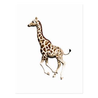 Carte Postale Girafe 3
