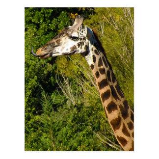 Carte Postale Girafe avec la langue collant courbée