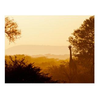 Carte Postale Girafe d'or d'heure