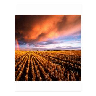 Carte Postale Gisement de chaume d'arc-en-ciel Saskatchewan