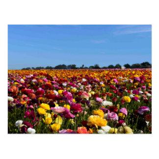 Carte Postale Gisements de fleur en Californie