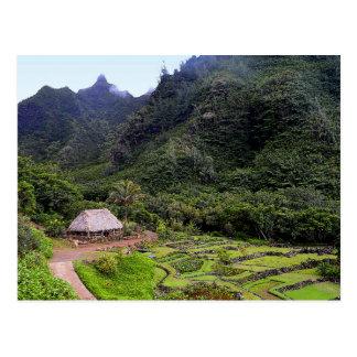 Carte Postale Gisements de taro de jardin de Limahuli, Kauai
