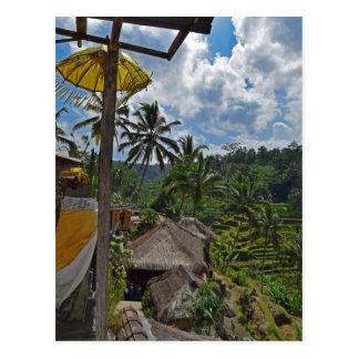 Carte Postale Gisements en terrasse de riz de Bali Indonésie